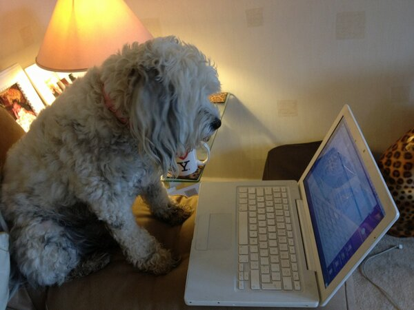 Bella checking her emails : Image Credit Christine Bacon