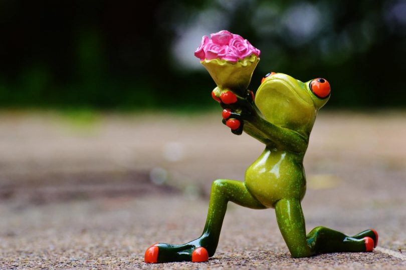 Frog on one knee with flowers