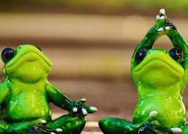 yoga, frogs, health, kettle mag, lifestyle,