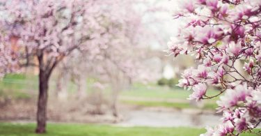Spring, seasons, student life, lifestyle, Hayley Scott, Kettle Mag