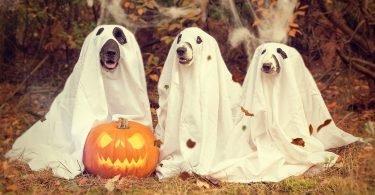 halloween, kettlemag,